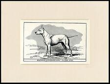 ENGLISH BULL TERRIER ANTIQUE 1900 WOOD BLOCK ENGRAVING DOG PRINT READY MOUNTED
