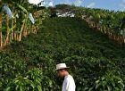 Colombian Cauca Gourmet Whole Coffee Beans Fresh Roasted Daily 2 / 1 Pound Bags