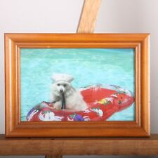 Dog Floating On A Raft In A Pool Framed Picture