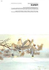 B98624 bird oiseau  postcard unicef paavo laine finland   animals animaux