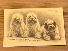 "Rare Tibetan Terrier Dog Anniversary Card Celebrating ""Bunti"" The 1St Tt Book"