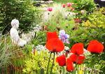 Whimsey's Garden