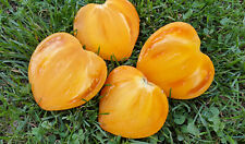 10 graines de tomate Coeur d'Achgabat- Heart of Ashgabat heirloom seeds méth.bio
