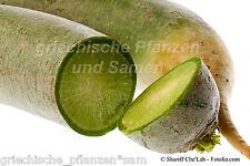 asiatische Radieschen 30 fresh seeds mild Radies green/white RARE