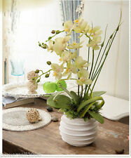 Unbranded Orchid Standing Flowers & Floral Décor