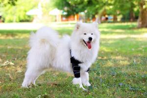 Ellenbogen Bandage & Liegeschwielen Bandage, Schulter Bandage für Hunde
