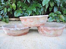 """3 Rare Victorian Terracotta Shallow Plant Pots Succulent Planters 6.5 - 7"""" 1104"""