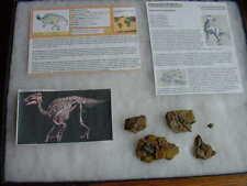 (DF198) Fossil REAL DINOSAUR EDMONTOSAURUS tooth bone dino Wow