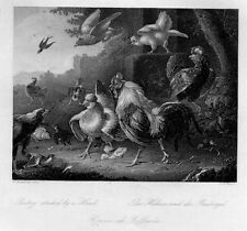Uccelli - Poultry attacked by a Hawk - incisione su acciaio, originale del 1860