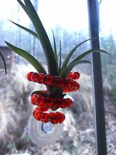 Air Plant=Suction Cup Holder=Air Plant Included!