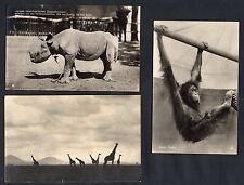 3 Postcard Dr Heck Berlin Zoo to founder Askania Nova Ukraine Cameroon ship mail