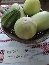 Riddle Melon - 5+ seeds - FINE SPECIALITY!