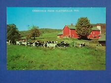 Postcard Greetings From Platteville WI Cows and Barn Unposted USA