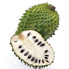 SOURSOP Graviola Guanabana Annona muricata SEEDS Tropical Fruit 10Pcs