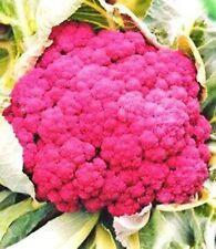 Purple Cauliflower Seeds - Rosamunde - German Open Pollinated Vegetable NON GMO