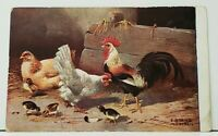 Country Rooster Hen Chicks E Dorno 1910 to Phoenixville Pa udb Postcard I19