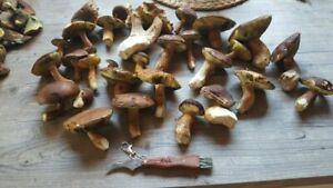 Geschenk Pilzmesser Pilze Gravur Schwammerlmesser Bürste Tasche