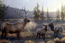 """Nancy Glazier """"Morning""""  Elk Print Signed and Numbered Art Print"""