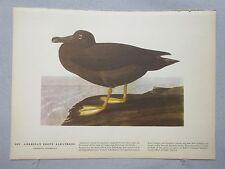 1942 Audubon #407 American Sooty Albatross & #408 American Scoter Lithograph