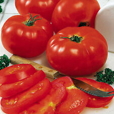 TOMATO Mary Italian Heirloom Seeds (V 282)