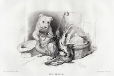 """Awesome 1800s Edwin Henry LANDSEER Antique Engraving """"The Hungry Pup"""" SIGNED COA"""