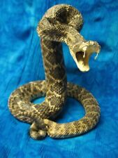 "37"" Western Diamondback Rattlesnake Mount, Taxidermy"