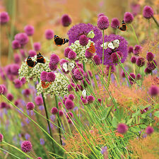 1 x Butterfly Allium Collection Also perfect as cut flowers or excellent gift.