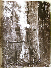 Timber wood cutters loggers poster from early 1900 photo - AUSTRALIA