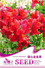 Original Package 60 Common Snapdragon Seeds Sweetheart Antirrhinum Flowers A181