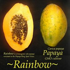 GMO ~RAINBOW PAPAYA~ Ring Spot Virus Disease-Resistant FRUIT Carica 30 Fine Seed