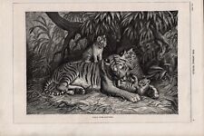 OLD ANTIQUE RSPCA MAGAZINE 1886 PRINT FOREST HOME HAPPINESS TIGER AND CUBS b14