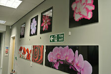 Pink Orchids Flowers Wall Art / Glossy Wall Picture / Tempered Glass Image