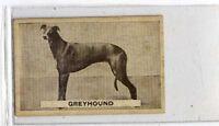 (Jb3023-100)  SWEETACRE,FAVOURITE DOGS,GREYHOUND,1932#21