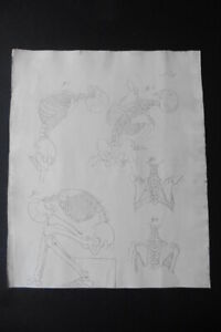 FLEMISH SCHOOL EARLY 19thC - ANATOMICAL STUDY - SKELETONS - INK DRAWING