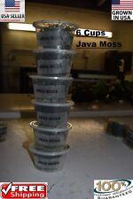 6 cups of JAVA MOSS plants Easy Aquarium aquascaping planted tank low light easy