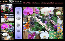 Accentuate Valuable Image Inside Business Video With Customized Image