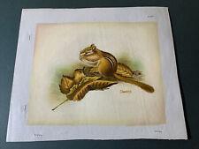 Vintage Oil Painting 8X10 Cheppy Animal Chipmunk In Leaves