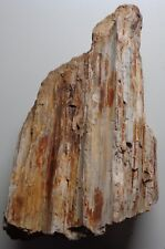 WRG- Petrified wood Specimen 2 pounds 10 oz Wyoming Agate