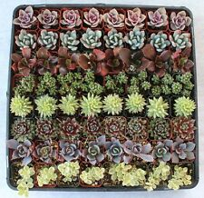 100 Beautiful SUCCULENT WEDDING COLLECTION succulents plant party favor gifts