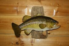 Real Skin Mount Large Mouth Bass Small Bluegill Walleye Fish Taxidermy FLM14