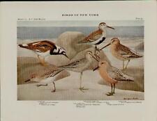 1910 BIRDS OF NEW YORK PLATES 33 & 35 - ARTISTS: LOUIS AGASSIZ FUERTES  #N074