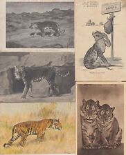 TIGERS TIGRES 27 Vintage ANIMALS Postcards pre-1940