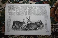 1865  Stich 81 / Hasen Leporiden