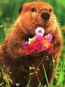 """I Dig You!"" VALENTINE'S DAY CARD Avanti ROMANTIC GOPHER w/ BOUQUET"