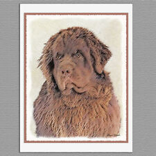 6 Newfoundland Brown Dog Blank Art Note Greeting Cards