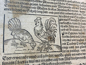 INCUNABULA FOLIO 1500s - Ptolemy the Astronomer, Lands of Africa, Domestic Birds