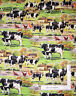Farm Barn House Cow Calf Pasture Scenic Cotton Fabric David Textiles By The Yard