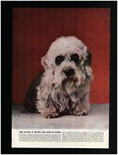 1941 Dandie Dinmont Terrier Dog Photo Original Print Caption Article ~