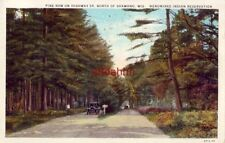 PINE ROW ON HWY 55 NORTH OF SHAWANO, WI MENOMINEE INDIAN RESERVATION 1931