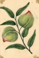 Mango Fruit Pith Painting – Original early 19th-century watercolour painting